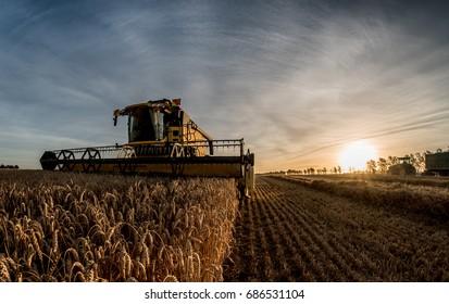 grain harvest combine harvester