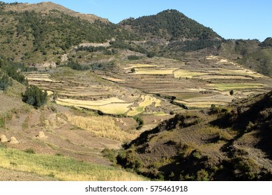 Grain harvest and fields in Ethiopia