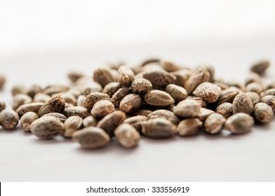 grain marijuana closeup, on a white background