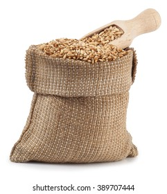 grain oats in burlap bag with wooden scoop isolate on white background