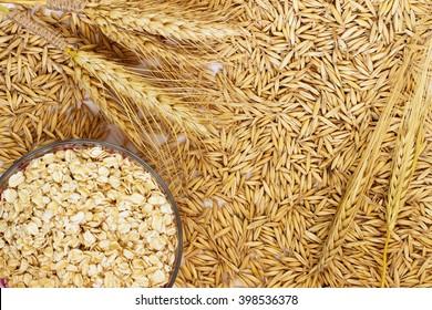 Grain oats, oat flakes in a box, twigs barley closeup