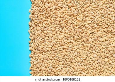 Grain of pearl barley scattered on blue desk on kitchen
