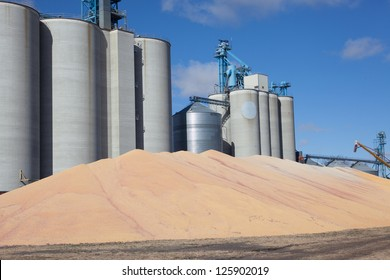 grain production