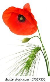 Grain and Red Poppy