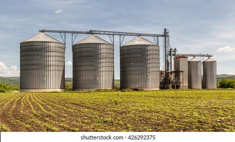 Grain silo and rape field
