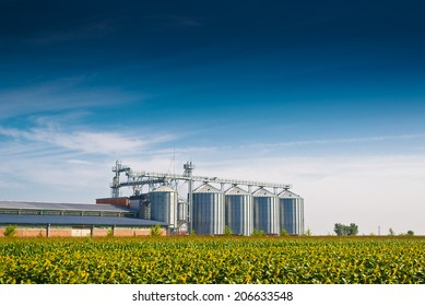 Grain Silos in Sunflower Field. Set of storage tanks cultivated agricultural crops processing plant.