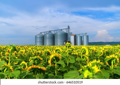 Grain silos in sunflower fields