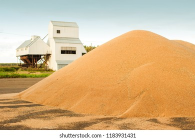 Grain storage silos. Harvest concept hill of grain, wheat, rye, barley, corn, rape, etc. Granary with mechanical equipment for receiving, cleaning, drying, grain shipment