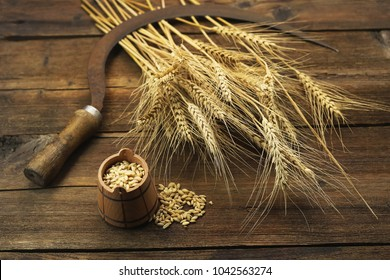 grain of wheat in a small wooden barrel. sickle and ears of wheat on a wooden background.