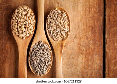 Grains and cereals in wooden spoons. Oats, wheat, rye, secale, barley.