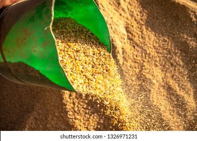 Grains of corn bran are dumped in a grain silo