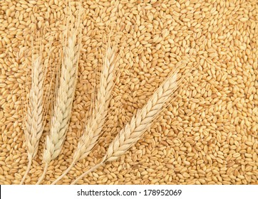 Grains and ears of wheat as background