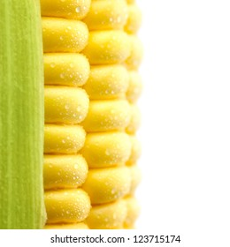 Grains of Ripe Corn with Water Droplets / Extreme Macro /  Isolated  / with copy space for text