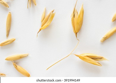 Grains and spikelets of oats on a white background