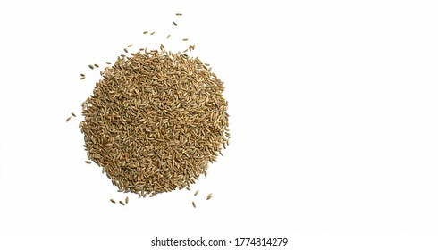 Grains of wheat, barley, rye, oat on white background natural dry grain in form of circle with scattered seeds on the left side, isolated, top view. Free space for text. Banner for web site