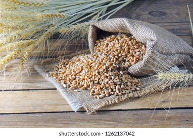 Grains of wheat and wheat spikelets. Top view