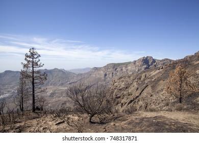 Gran Canaria after wild  fire, October 2017, Las Cumbres, view into Tirajana valley