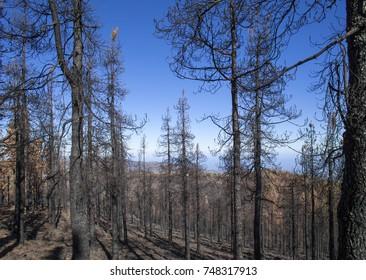 Gran Canaria after wild  fire, October 2017, Las Cumbre s- the highest areas of the island