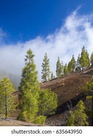 Gran Canaria, central areas of the island, montain valley filled with clouds