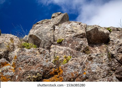 Gran Canaria, Igneous rock outcrop with some plants and lichens spots