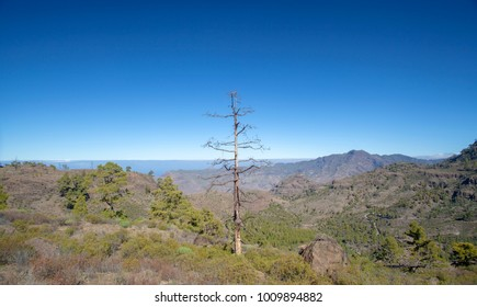Gran Canaria, January 2018, view from a hiking path on the border of Integral Nature Reserve Inagua towards Montana Altavista