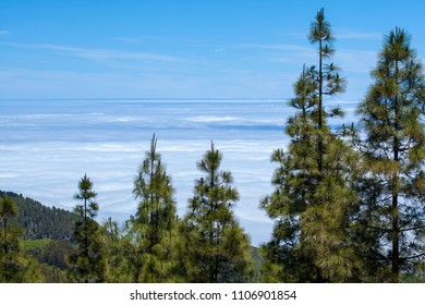 Gran Canaria, June, views along hiking path Cruz de Tejeda - Artenara, sea of clouds