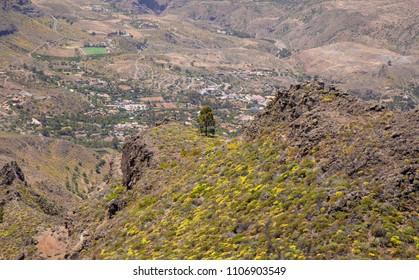 Gran Canaria, June, views along hiking path between ravine Barranco de Guayadeque and Caldera de Tirajana