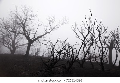 Gran Canaria, Las Cumbres, the highest areas of the island, after forest fire of september 2017, strong fog, Cruz de Tejeda area