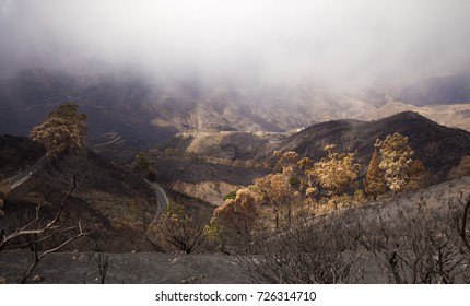 Gran Canaria, Las Cumbres, the highest areas of the island, after forest fire of september 2017, view ito Caldera de Tejeda, cloud cover