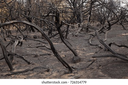 Gran Canaria, Las Cumbres, the highest areas of the island, after forest fire of september 2017
