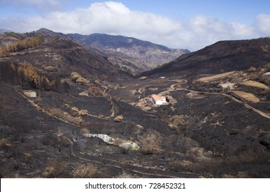 Gran Canaria, Las Cumbres, the highest areas of the island, after forest fire of september 2017, burned area around the start of Barranco de La Mina ravine, white house stand unaffected
