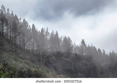 Gran Canaria, March 2018, Las Cumbres - the highest areas of the island, clouds rolling