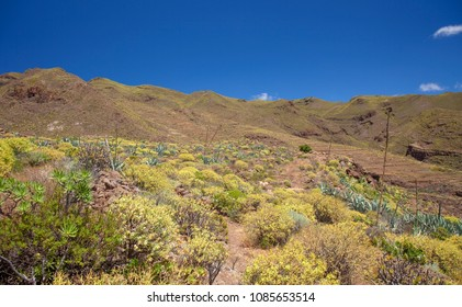 Gran Canaria, May, view along hiking path Temisas - Aguimes, countryside still green after winter rains