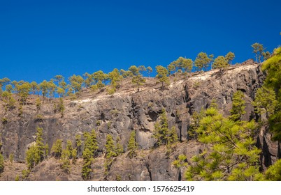 Gran Canaria, November 2019, view from the western borders of Nature reserve Inagua upwards to the cliffs fringed with Canary pine trees