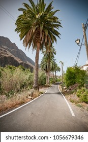 Gran Canaria a spanish island in europe spain a famous vacation with colorful landscapes for travel in spain. From the desert to beautiful oases with palms, cacti and aloe vera