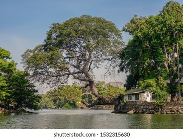 Granada City, Nicaragua - April 4, 2017: View of a large tree with roots on one of the islands inside Lake Cocibolca, Nicaragua
