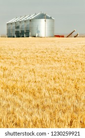 Granaries for storing harvested grains in a field of wheat.  Focus on the wheat.