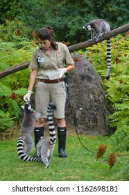 GRANBY QUEBEC CANADA 0815 2018: Lemurs keeper with their animals for  take medical care and feeding animals