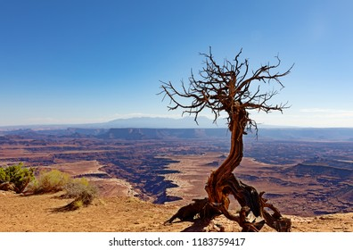 Grand Canyon with deep cuts and dead tree in forefront