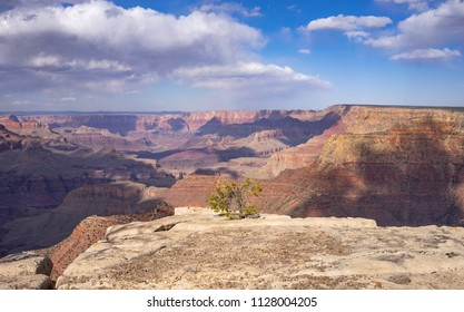 Grand Canyon landscape with single tree on the rock at Grandview Point, South Rim, Arizona. USA