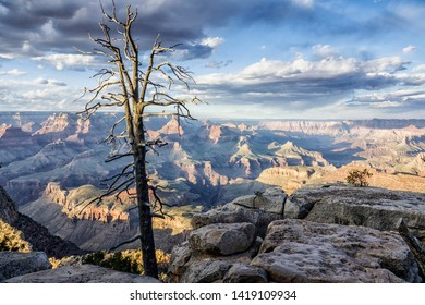 grand canyon south rim landscape with a dead tree in the evening, Arizona, USA