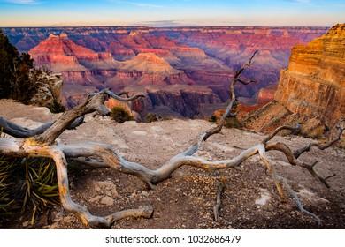 Grand canyon sunset landscape with dry tree foreground, Arizona, USA