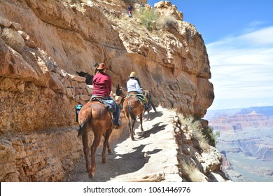 Grand Canyon Village, USA - MARCH 25, 2018 : Mule trip rides from the bottom of Grand Canyon
