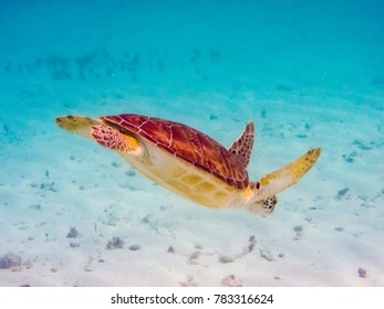 Grand Cayman Sea Turtles