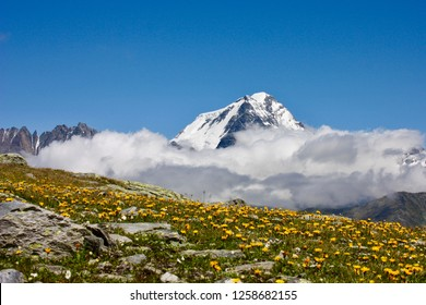 The Grand Combin and a alpine flowerfield