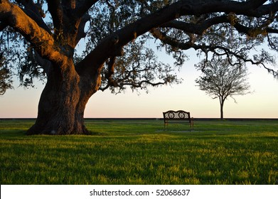 A grand oak tree overhangs a lone bench at sunset.