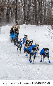 GRAND PORTAGE, MN - JANUARY 29, 2019: Erin Altemus' team comes in to Mineral Center checkpoint during the John Beargrease Sled Dog Marathon. Altemus finished 5th on January 29th.