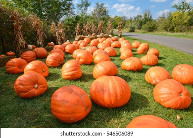 Grand Rapids, Michigan - September 26, 2015:  A patch of giant pumpkins at the beautiful Meijer Gardens