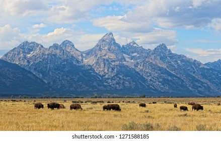 Grand Teton National Park is an American national park in Northwestern Wyoming. It is dominated by the Teton Mountain Range and encompasses about 310,000 acres including the American Buffalo.