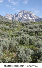 The Grand Tetons View